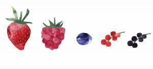 Unsere neuen Beeren im Logo Beerengarten