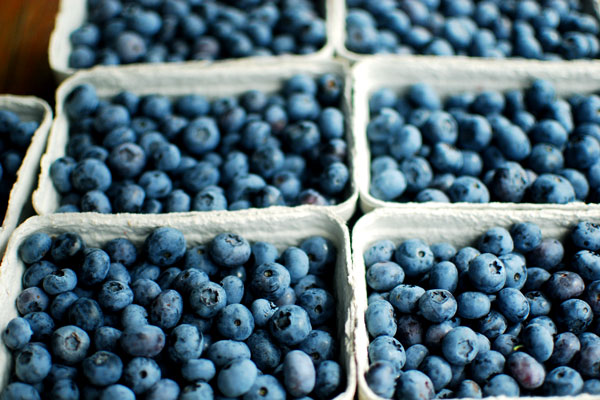 6 Schalen voller blauer Heidelbeeren