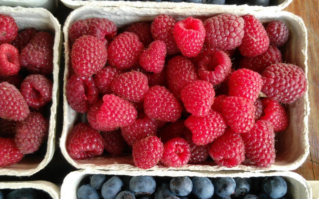 Haupternte bei Heidelbeeren, roten Johannisbeeren und späten Erdbeeren, erste Himbeeren